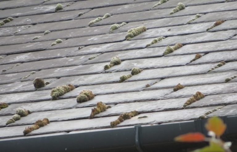 Victorian Roof Repairs – Starting Point for any Renovation