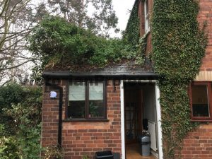 Remove Ivy from Brick